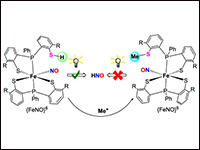 Photoinduced NO and HNO Production from Mononuclea...