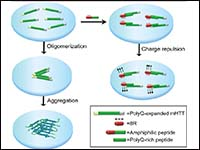 Nanoscopic insights of amphiphilic peptide against...