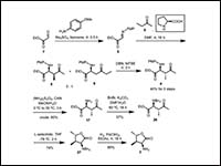 Total synthesis and absolute structure of N55, a p...