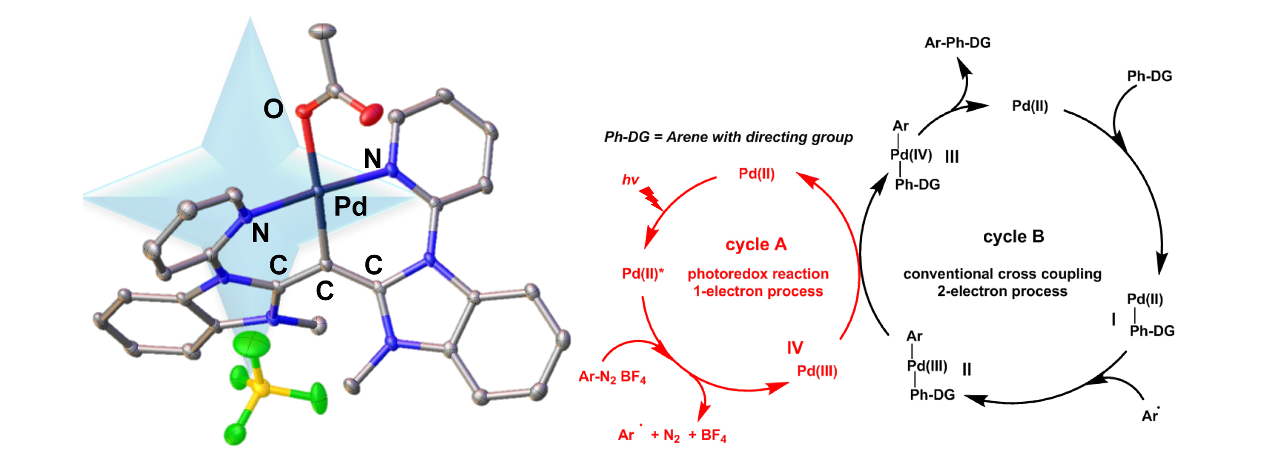 One-Pot Tandem Photoredox and Cross-Coupling Catalysis with a Single Palladium Carbodicarbene Complex