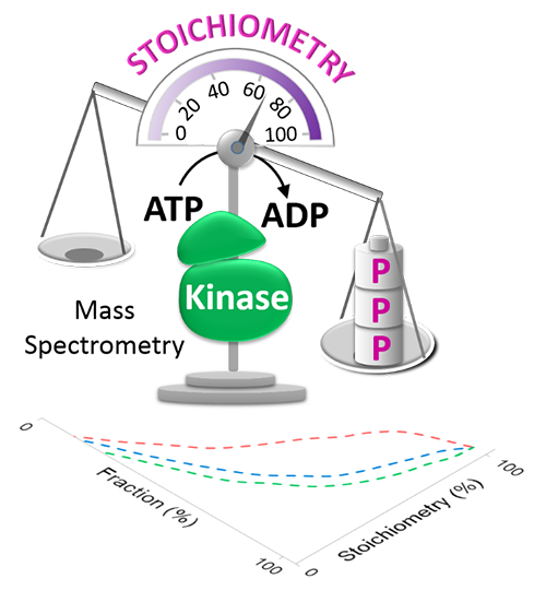 Large-scale determination of absolute phosphorylation stoichiometries in human cells by motif-targeting quantitative proteomics